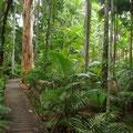Direkt in der Stadt beginnt auch der Regenwald...