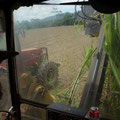 Nebenher faehrt der Traktor mit einem Haenger, in den die Stuecke dann direkt reinkommen...