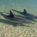 Sie kamen direkt bis ans Ufer geschwommen.