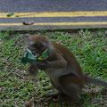 ... weil in einem Affentempo (ich weiss jetzt, warum das so heisst) eine Affe angerannt kam und mir meine Tuete mit Suessigkeiten aus dem Rucksack klaute...
