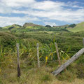 ... und es gibt keinen Zweifel daran... dies ist Neuseeland!