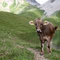Die Kühe haben uns die ganze Zeit beglockt...
