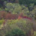 Man spuert uebrigens ganz deutlich, dass Herbst ist...