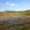 Zwischen den Küsten sieht man diese Biotope.