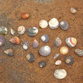 Ud zwischen all den Steinen findet man auch sehr schoene Muscheln...