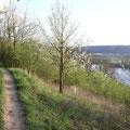 Jetzt wird der Rheinsteig langsam seinem Namen gerecht.