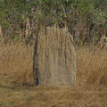 Dies sind magnetisch ausgerichtete Termitenhuegel, die in den kuehleren Flussniederungen so gebaut werden, um abends und morgens die maximale Sonnenwaerme zu bekommen.
