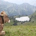 Auch Kühe scheinen das Panorama zu genießen.