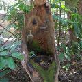 ... ein Bushcamp-Waschbecken...