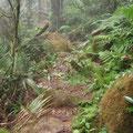 Der Regenwald aendert mit jedem km auch sein Aussehen...