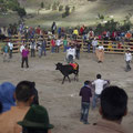 Meist jedoch war die Arena voller Halbwuechsiger, da die Stiere nicht viel Lust auf Atacken hatten.