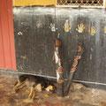 Die Hunde auch... :-)