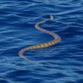 ... und eine Seeschlange