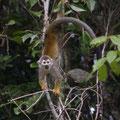 In den Baeumen sieht man nicht nur Affen umherspringen...