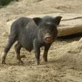 Sowohl die Kinder als auch das Schwein begutachteten uns skeptisch.