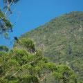 Gipfel des Mt. Warning. james Cook hat ihn uebrigens so genannt, weil er die Seefahrer vor den Klippen des Landes gewarnt hat.