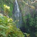 Wasserfall im Lamington NP