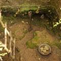 und dann tiefe Loecher in die Erde graben, um auf die unter der Erde liegenden Kauribaeume und ihr Harz zu treffen