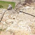...weil der kleine Koala doch unbedingt nochmal klettern wollte... :-)