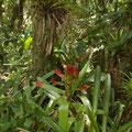 Die Inselhat tropische Vegetation.