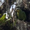 und ein Papagei praegen die Lagunentierwelt...
