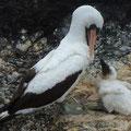 Viele Vögel haben Junge, lassen sich aber durch unsere Anwesenheit nicht stören.