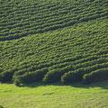 Unterwegs gibts jede Menge Plantagen...