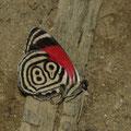 ... und die Schmetterlinge zeigten sich auch in allen Farben.