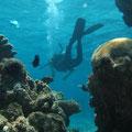 Wir tauchen ab und es folgen ein paar Impressionen der vielfaeltigen traumhaft schoenen Unterwasserwelt...