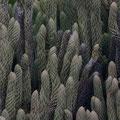 Lustige korallenartige Pflanzen gab es zu sehen.