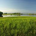 In den gruenen Feuchtgebieten des Kakadu NP leben nicht nur Krokodile...