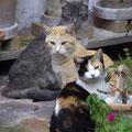 Katzen strolchen überall herum...