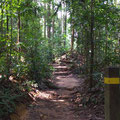 Regenwaldpfad - eine willkommene Abwechslung zum hektischen Stadtalltag