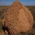 Termitenhuegel, so weit das Auge blicken kann