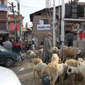Auf den Straßen sieht man zwischen den Autos überall Schafe.