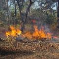 Ursache sind die Buschfeuer...