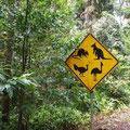 ... und Regenwald (leider streckenweise auch im wahrsten Sinne des Wortes... :-)