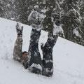 Wir tollen ausgelassen im Schnee.