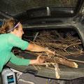 Auf dem Rueckweg sammeln wir Holz fuer unser Feuer...