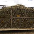 Dies ist der Wagon, den ich mit geerntet habe. ich finde, das hab ich gut gemacht!!!! :-)