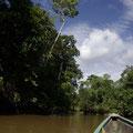 Per Boot gehts Richtung Dschungel-Lodge.