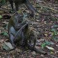 Dies war mein affengeiler Tag in Singapore und ich verzichtete nach diesem Erlebnis darauf, mir fuer 30 Dollar den Zoo anzuschauen, der zwar sehr schoen sein soll, der aber diese Erlebnisse nicht haette toppen koennen...