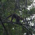 Die Affen bekommt man schwer aufs Foto. Sie bewegen sich so schnell und man fotografiert immer gegens Licht.