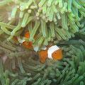Nemo, da wohnt er!!!!!