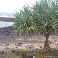 Der Strand ist sehr steinig, weil hier im Hinteland mal ein Vulkan ausgebrochen ist...