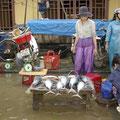 Da kommen die Fische fast bis auf die Theke geschwommen... :-)