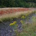 Mir gefallen die Kontraste zwischen den gelben Blumen und den roten Steinen...