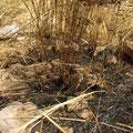 Ebenso diese verbrannten Flecken, denn fuer diese Zeremonie wird der ganze Weg in Rauch gehuellt.