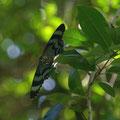 Umgeben von tausend schillernden Schmetterlingen
