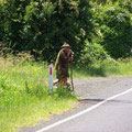 Am Ortsausgang von Nimbin steht dieser Tramper...